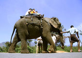 Indian tourist family taking a ride on elephant — Stock Photo