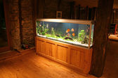 Fish tank during the night — Stock Photo