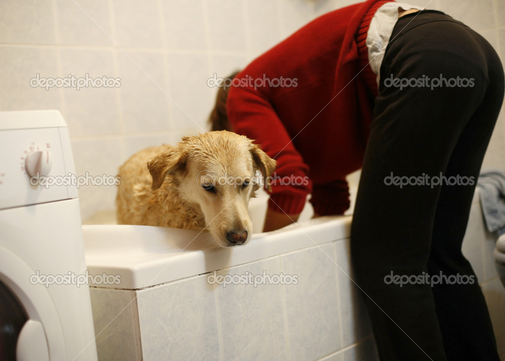 Woman washing her pet dog in the bathtub of her home — Stock Photo #8048676