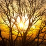 Sunset through trees — Stock Photo #8247950