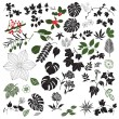 Collection Of Floral Design Elements - Stock Vector