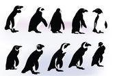 Penguins — Stock Vector