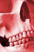 A Close Up of a Human Skull in Red — Stock Photo