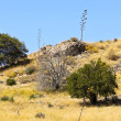 Stock Photo: Lovely Hillside in High Desert
