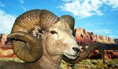 A Bighorn Ram at the Vermilion Cliffs — Stock Photo