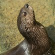 Stock Photo: Inquisitive otter on bank of river