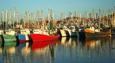 A Colorful Fleet of Shrimp Boats Docked at the Marina, Rocky Point, Mexico — Stock Photo