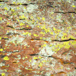 Stock Photo: Mix of Lichens on Rhyolite Rock