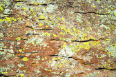 A Mix of Lichens on Rhyolite Rock — 图库照片