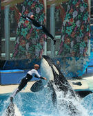 A Pair of Trainers are Thrown Through the Air By Orcas — Stock Photo