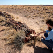 Stock Photo: WomExamines Petrified Log in Petrified Forest