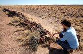 Una donna esamina un log pietrificato nella foresta pietrificata — Foto Stock