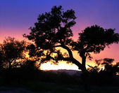Madera Canyon Silhouette — Stock Photo