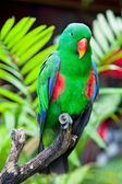 Great-billed Parrot in nature surrounding — Stock Photo