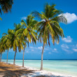 Palm trees hanging over a sandy white beach — Stock Photo