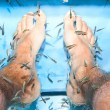 Fish spa feet pedicure skin care treatment — Stock Photo
