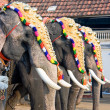 Decorated elephants for parade , Cochin, India - Stock Photo