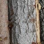 Sezione albero — Stock Photo