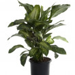 Green Plant for Present — Stock Photo