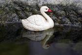 Hračka kachna — Stock fotografie