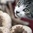 Feline with mushrooms — Stock Photo #8044592
