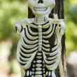 Stock Photo: Skeleton