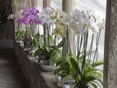 Orchidee in un chiostro — Foto Stock