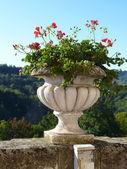 Pot of geraniums — Stock Photo