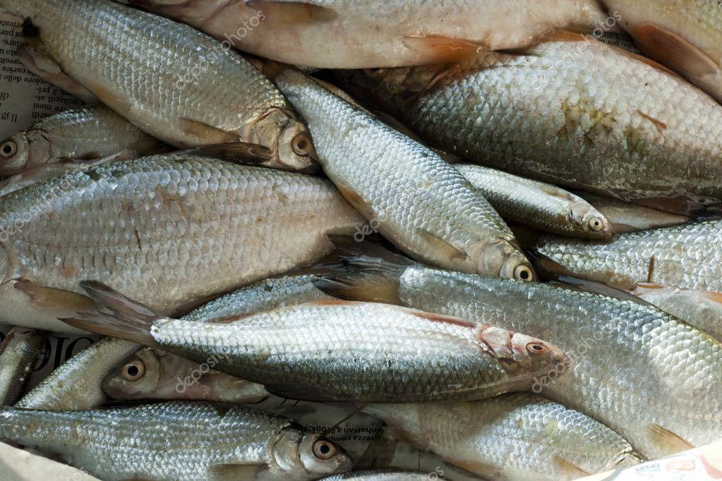 Pesci d 39 acqua dolce foto stock 8075120 for Pesci acqua dolce commestibili