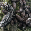 Pine cones — Stock Photo #8112572