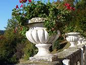 A pot of geraniums — Stock Photo