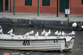 Seagulls on a boat — Stock Photo
