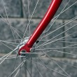 Bicycle front wheel — Stock Photo