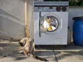 Washing machine teddy bear — Stock Photo