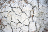 Trockenen böden — Stockfoto