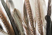 Feathers close up — Stock Photo