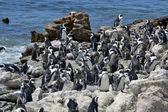 Penguins on the coast — Stock Photo