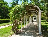 Pergola in Botanical Garden in Rio de Janeiro — Stock Photo