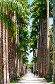 Botanical garden. Rio de Janeiro — Stock Photo