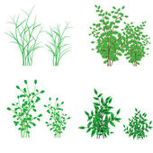 Grass, shrubs — Stock Vector