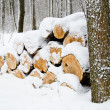 Stock Photo: Sawn wood winter