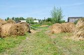 Pilhas de feno no campo — Fotografia Stock