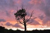 Alarm sunset — Stock Photo