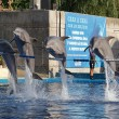 Royalty-Free Stock Photo: Show of dolphins. A Madrid zoo, Madrid, Spain.