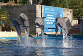 Show of dolphins. A Madrid zoo, Madrid, Spain. — Stock Photo