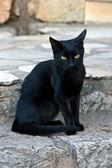 Black cat sitting at stone — Stock Photo