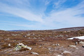 North Desert. Arctic Circle line, Norway. — Stock Photo