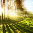 Sunny forest early in the morning — Stockfoto