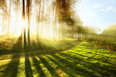 Sunny forest early in the morning — Stock Photo