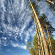 Trees against the blue sky — Stock Photo